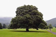 Энергия деревьев. Как подзарядиться с помощью деревьев